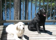 your pets are welcome in our waterfront pet friendly cottages